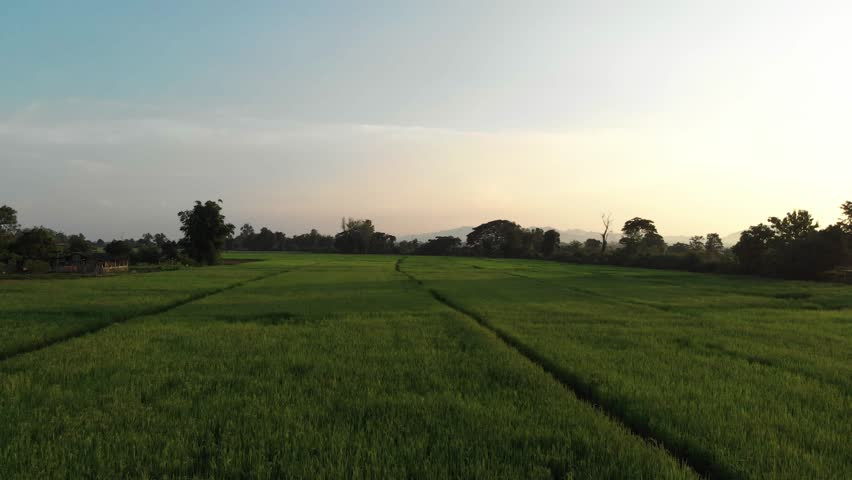 Sunset at agriculture green rice field in Asian country  | Shutterstock HD Video #1016610835