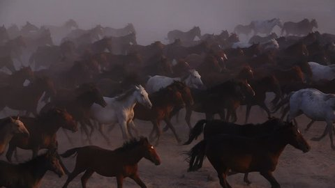 Wild Horses running (s;p-mo)