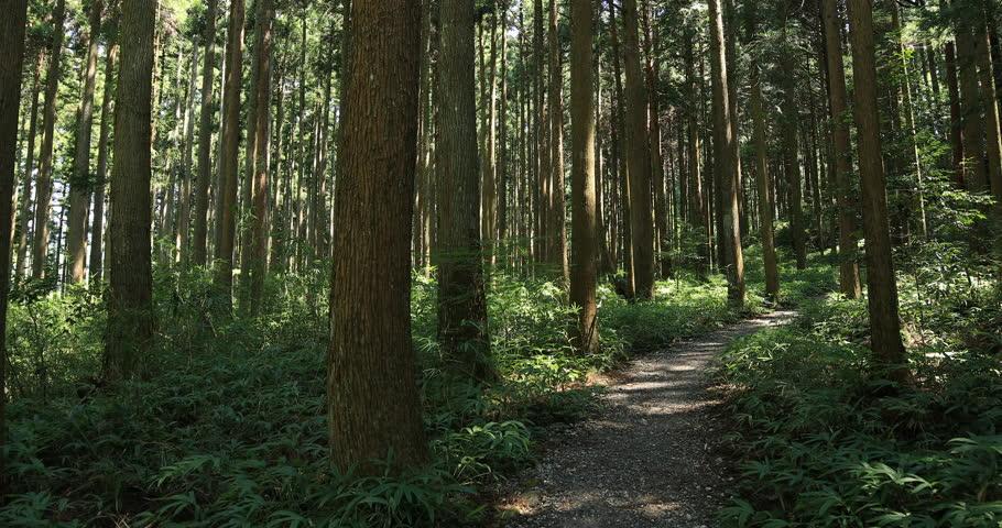 Seki-ward Gifu / Japan - 08.07.2018 : It's a cedar forest in Gifu. 4K. camera : Canon EOS 5D mark4 | Shutterstock HD Video #1016967355