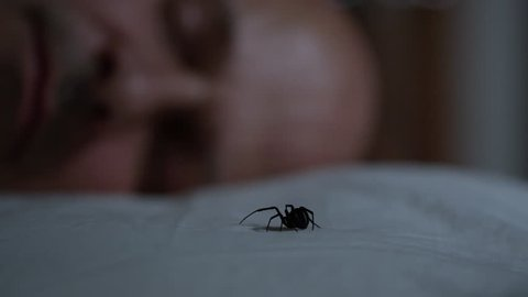 Man wakes up to Black Widow on his pillow in the dark at night.