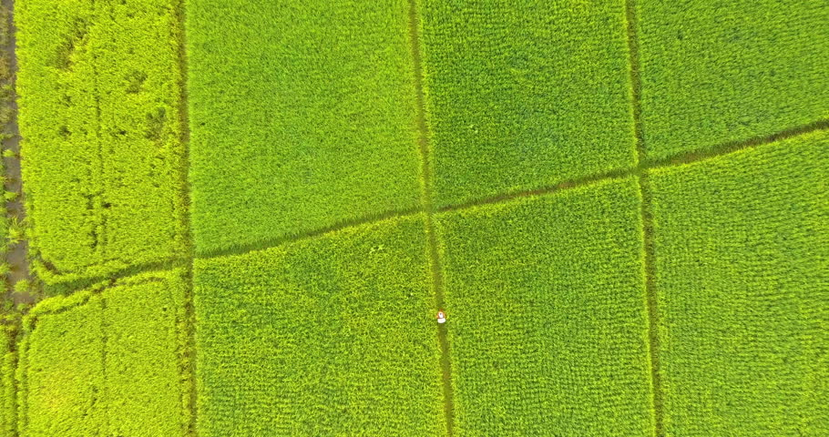 Aerial view agricultural farming land while farmer spray insecticide herbicide chemicals. The concept work of a farmer with toxins.