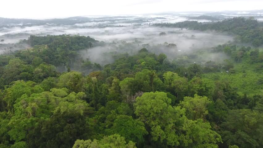 Mystic and foggy drone flight over the canopy primary tropical rainforest. Saül Guiana Amazonian Park