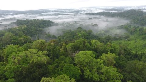 Mystic and foggy drone flight over the canopy primary tropical rainforest. Saül Guiana Amazonian Park