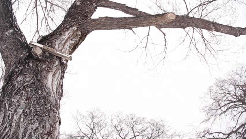 Tree covered in snow during a blizzard. Camera on slidering towards tree and tilting up to reveal branches. Shot during a blizzard in winnipeg, manitoba.