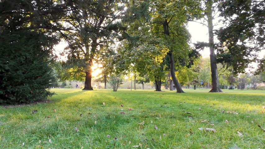 Autumn in the Park, Trees and Grass | Shutterstock HD Video #1018235845