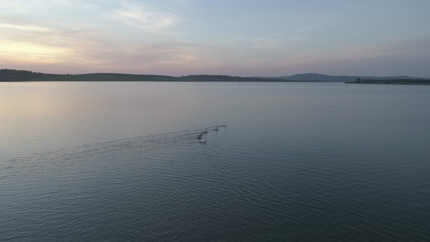 Flock of swans on the top of the water at sunset. View from above. | Shutterstock HD Video #1018540225