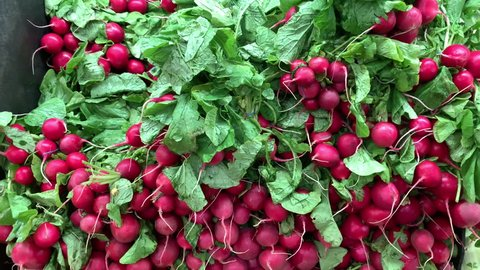 Radishes is an edible root vegetable