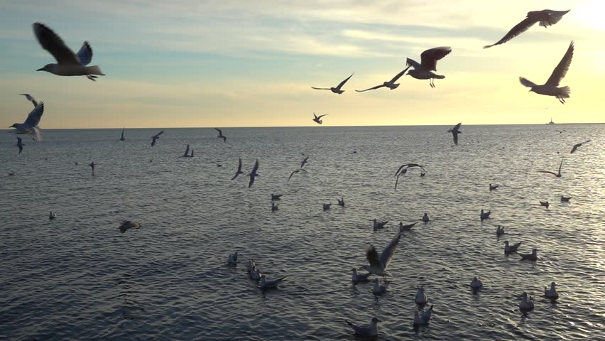 Seagulls over the sea. Slow motion. | Shutterstock HD Video #1018701055