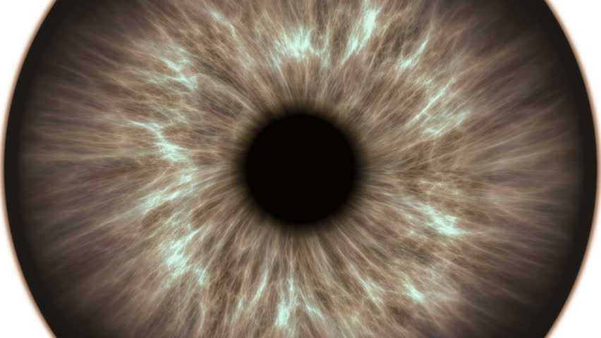 Brown human eye dilating and contracting. Very detailed extreme close-up of iris and pupil. #1019487145