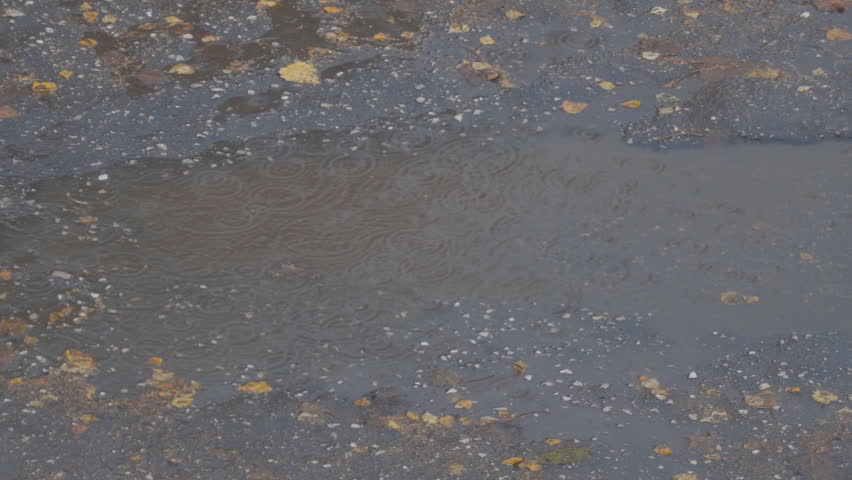 Drops of autumn rain in a puddle on the pavement. In a puddle of autumn leaves | Shutterstock HD Video #1019859475