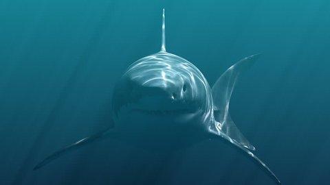 Great White Shark Megalodon . Realistic 3d animation 4K