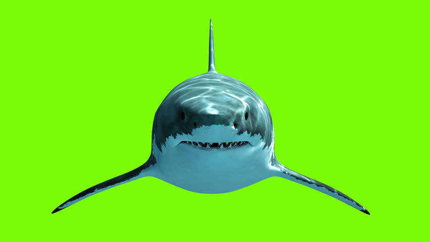 Great White Shark Megalodon on a green background. Two seamless looped 3d animations. 4K