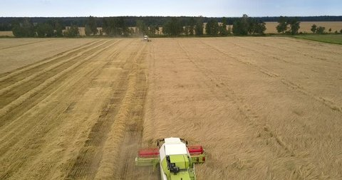 pictorial aerial view combine header rotates and gathers ripe grain among huge golden fields in countryside