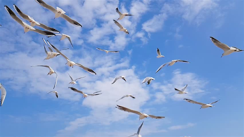 A group of seagulls flies against the wind, sky in the background, a group of birds of seagulls circling over the seashore, white seagulls flying over the sea, slow motion, seagulls against a blue sky | Shutterstock HD Video #1020479455