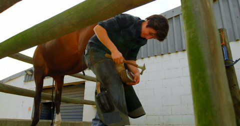 Low angle view of a woman blacksmith putting horseshoes in horse leg at stable. Hitting it with a hammer.