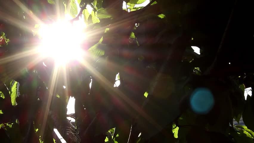 Defocus, nature background. | Shutterstock HD Video #1020894085