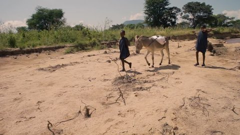 Idodi, Africa / Tanzania - 03 25 2016: Boys nomad shepherds report the donkey home