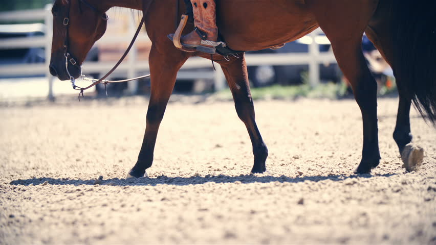 Relaxed horse riding in western boots slow mov HD. Long shot slow motion of a brown quarter horse in focus slowly walking in riding arena. Side shot with cowboy boots in a stirrup. | Shutterstock HD Video #1021379545