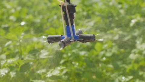 Springer water system working in hydroponic vegetable farm