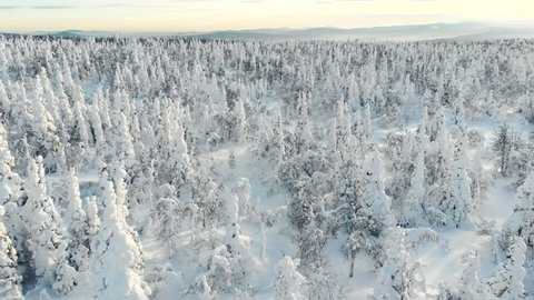 Winter Forest Frozen Trees Aerial View Spruce Wood In Winter Aerialdrone View Of Snow Covered Evergreen Christmas Tree Forest After Snowblizzard Beautiful Nature Background Snow Forest Aerial