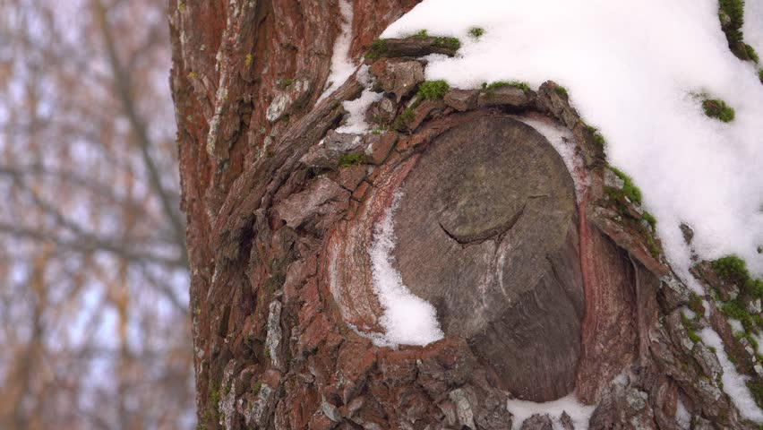 Sawed wooden branch. Tree trunk texture in winter. Forest and urban park management. | Shutterstock HD Video #1022311585