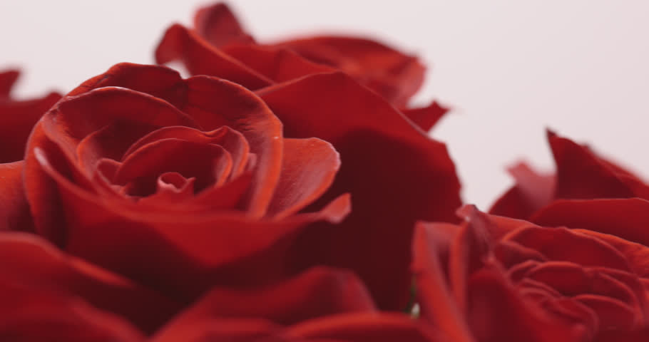 Bouquet of Roses on white background. close-up with camera movement. | Shutterstock HD Video #1022447995