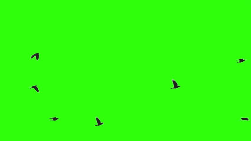 Flock of Birds on Chroma Key | Shutterstock HD Video #1022663695