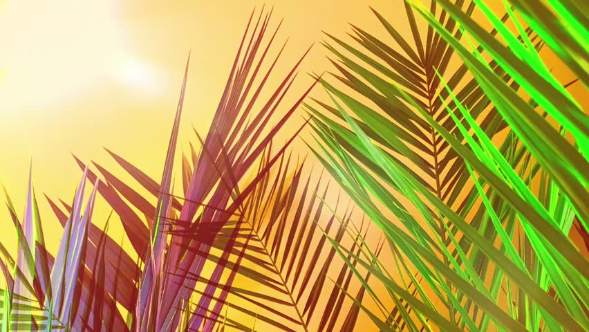 Tropical style palm tree leaves animation with empty space for text  | Shutterstock HD Video #1022667865