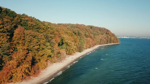 Aerial view of trees near the Baltic sea in Gdynia, Poland