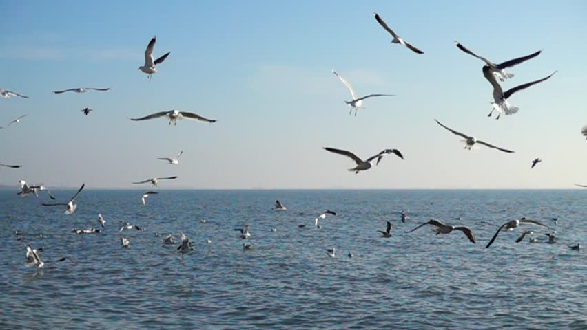 Seagulls over the sea. Slow motion.   Shutterstock HD Video #1023169855