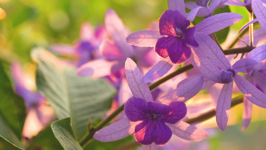 close up of violet flower. The wind blows a bouquet of flowers in the evening sun. concept : wild flowers
