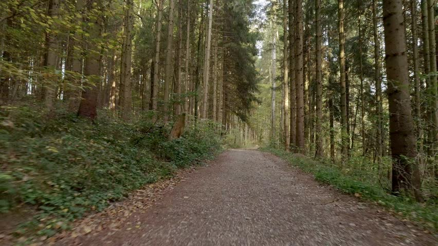Flying the drone in the woods in southern Germany | Shutterstock HD Video #1023285295