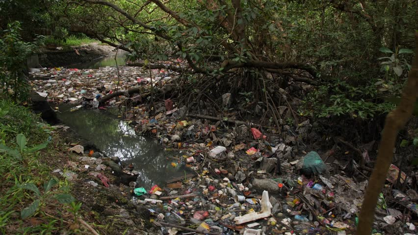 Environmental Pollution Ecological Problem Concept. Huge Dump in Tropical Mangrove Tree Forest. Plastic Waste Rubbish Floating in Lake Water. 4K. Bali, Indonesia. | Shutterstock HD Video #1023667825