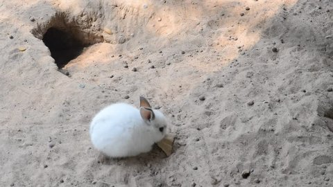 The white rabbit in the zoo lives in the hole.