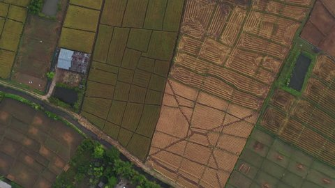Aerial scene of rice field in north of thailand, chaing mai province in day time