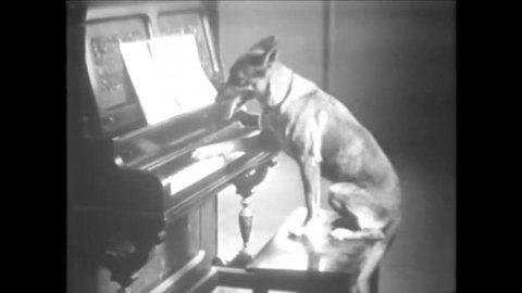 CIRCA 1920s - Black and white footage of a dog playing the piano in the 1920's