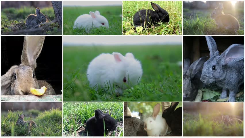 Collage of rabbits, many rabbits, beautiful rabbits, concept of the Easter | Shutterstock HD Video #1024235165
