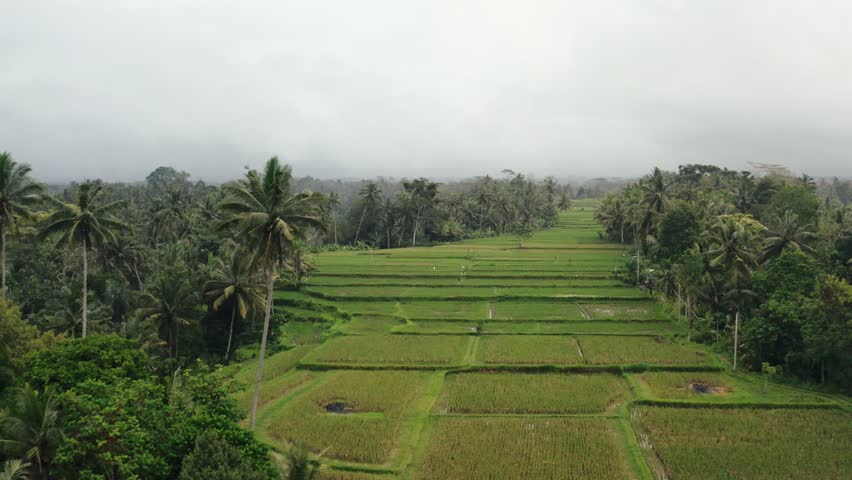 Shooting from the air - flight over the rice fields of Bali. Beautiful view of green palm trees and cloudy gray sky | Shutterstock HD Video #1024384985