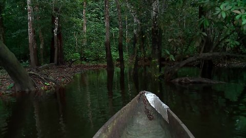 POV of the bow of a Dugout Canoe Moving Slowly Through Natural Tunnel Of Mangrove Forest Vegetation, Ebogo Lake, Cameroon, Africa.