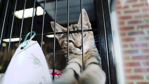 Charlottesville, VA / United States - 09 29 2018: Kitten waiting to be adopted