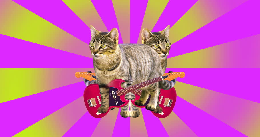 Animation minimal art. Funny Animation Cat with a guitar.
