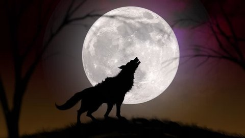 4k : Wolf Howling at the Moon, Silhouette of wolf howling at the full moon