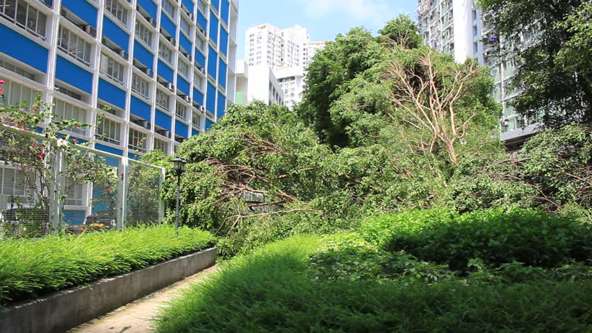 September 19, 2018, after the typhoon mangkhut in Hong Kong, big trees collapse on the garden by the strong wind, nearby school, and public housing, block the road. | Shutterstock HD Video #1025727245