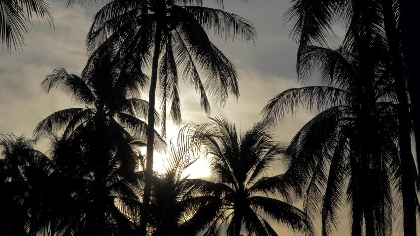 Silhouette of palm trees at a beautiful sunset. Tops of palm trees against background of sunny sky. View of branches palms at the sunset. Summer traveling vacation and tropical concept . | Shutterstock HD Video #1025943335