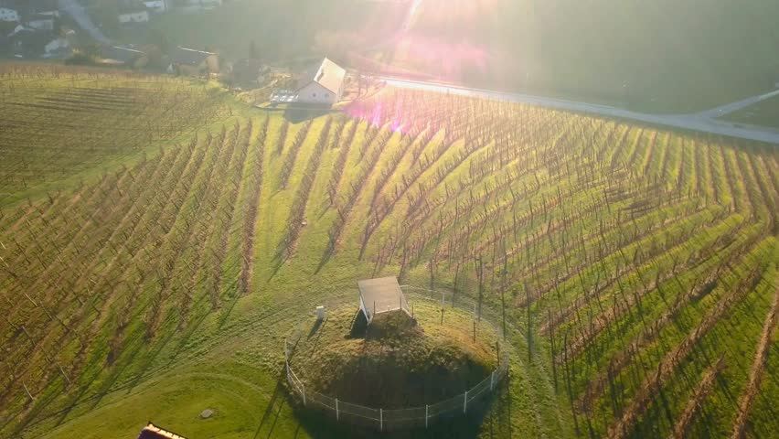Aerial: Flying over hills filled with wine plantages at beautiful autumn sunset. Filming Slovenian wine making countryside with drone. | Shutterstock HD Video #1025970965