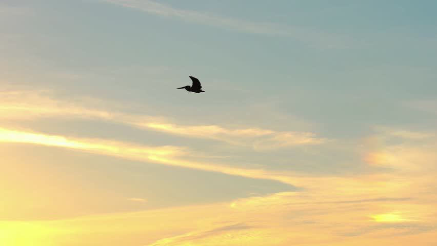 Slow Motion pelican flies through evening sky | Shutterstock HD Video #1026059975