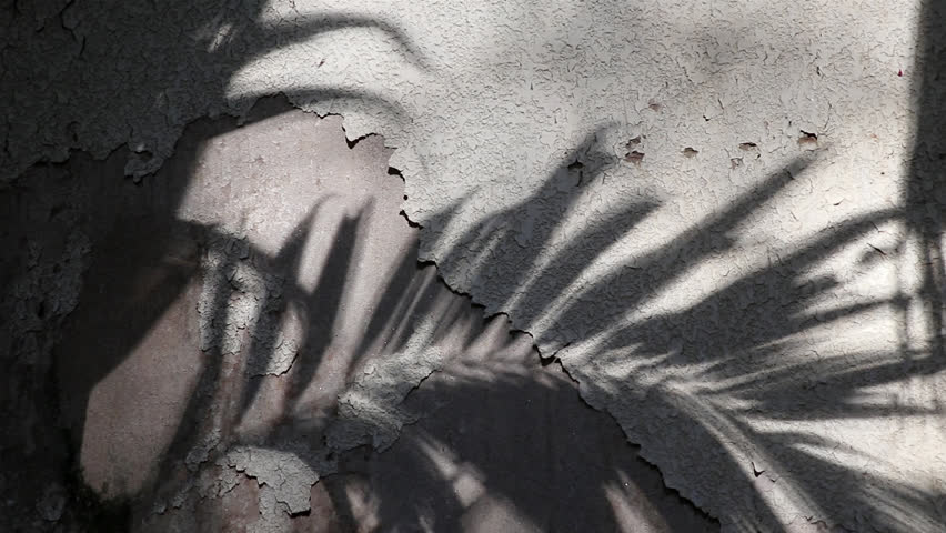 Manila palm tree shadows reflected on the old concrete wall coated with peeled textured paint | Shutterstock HD Video #1026186455