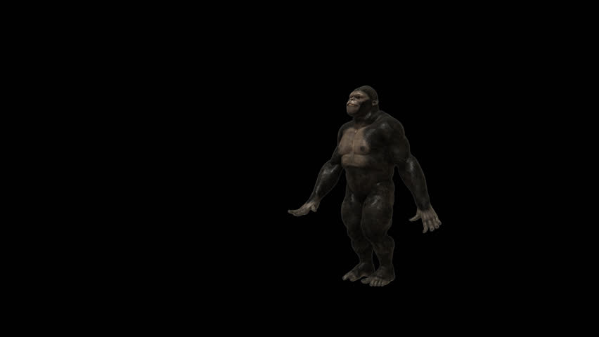 Gorilla Funny Hip Hop Street Stock Footage Video (100% Royalty-free)  10262285 | Shutterstock