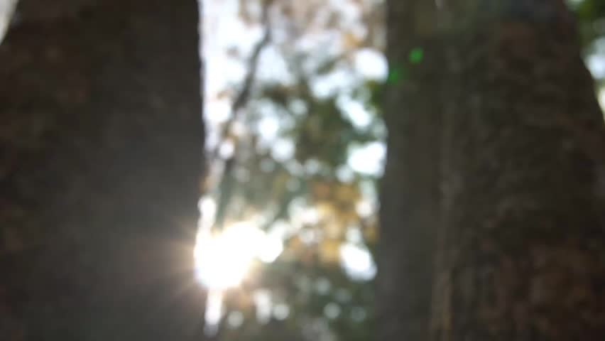 Blur Background of forest | Shutterstock HD Video #1026256865