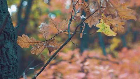 The wind rustles dry leaves in the autumn forest   In the autumn forest the wind rustles with dry leaves.